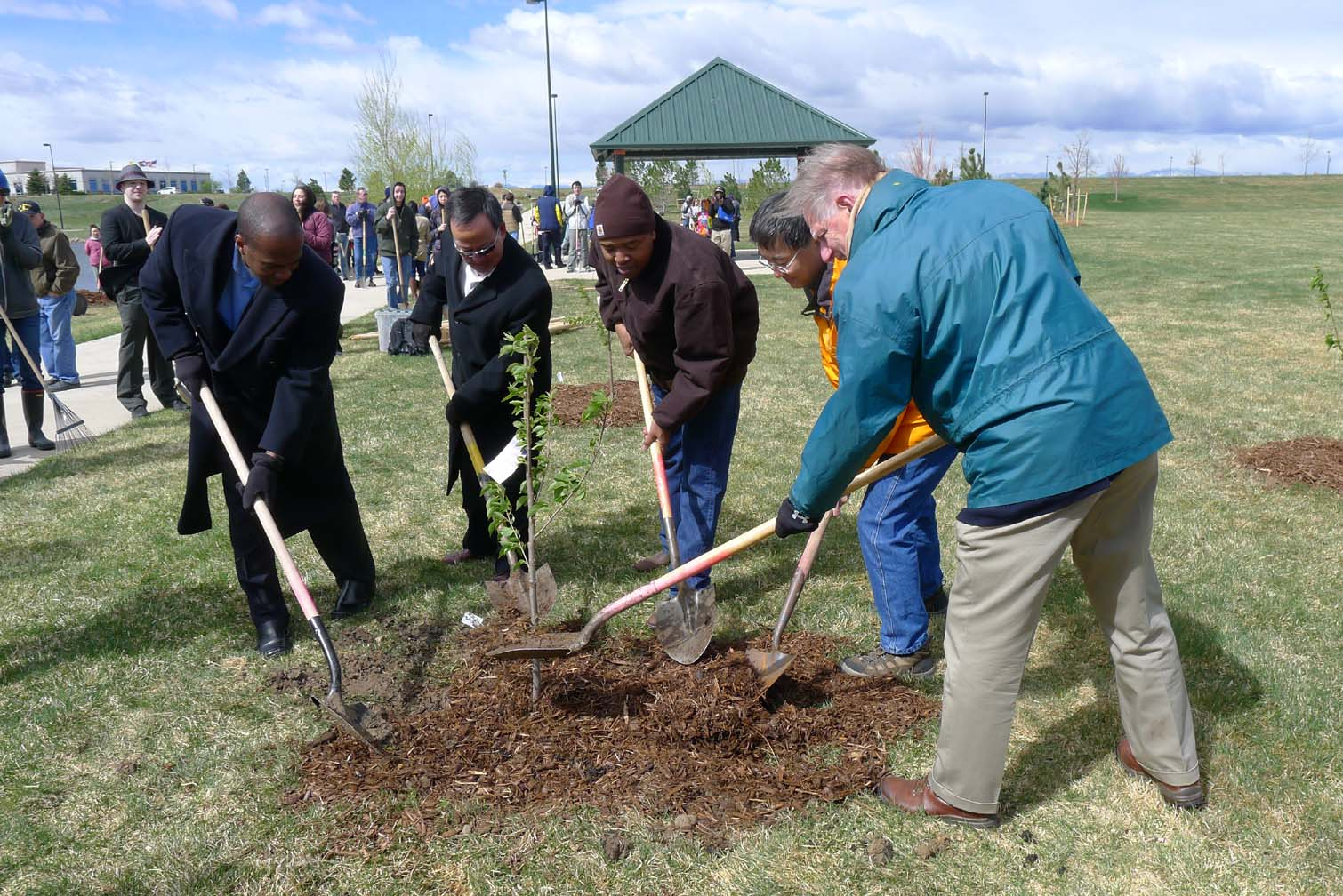 cherry tree tree planting - dignitaries