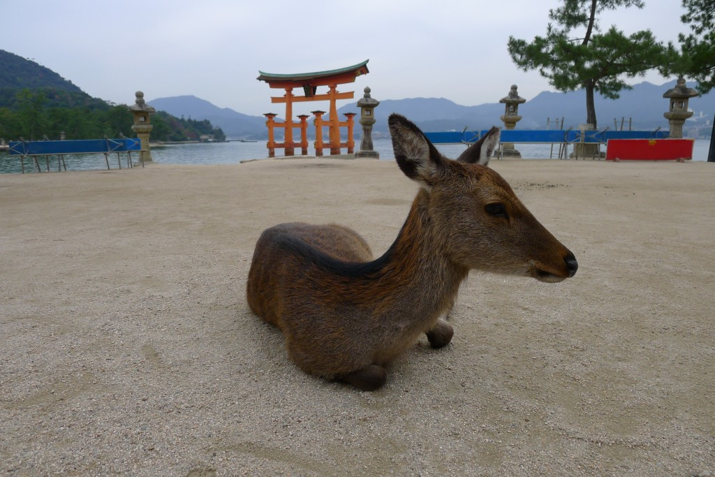 Deer at Ise Shrine near Hiroshima, Japan
